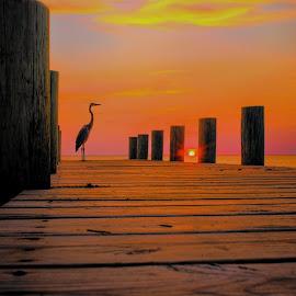 sundown by Earl Wyant - Landscapes Sunsets & Sunrises ( bird, sky, hdr, bay, color, colorful, sunset, doc, pier, ocean, sun, herring )