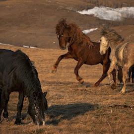 FREE by Andrija Vrcan - Animals Horses ( animals, horses, wild horses )