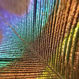 Peacock feather pattern by Arun Karanth - Abstract Patterns ( bird, colourful, nature, pattern, india, glowing, feather, closeup, peacock )