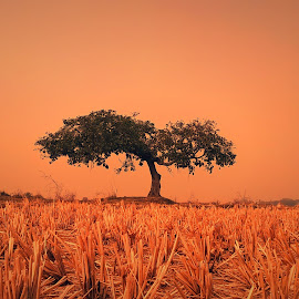 Alone by Sourav Malik - Instagram & Mobile Other ( field, nature, tree, longexposure, lonely )