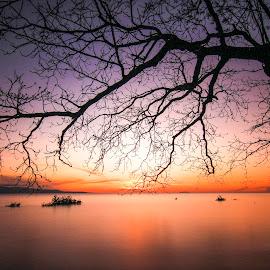 Stay Strong by Sadam Phoka - Landscapes Sunsets & Sunrises