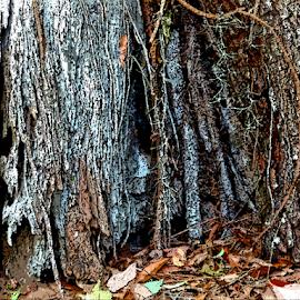 Tree Trunk by Edward Gold - Digital Art Things ( digital photography, tree trunk, gray bark, brown bark, brown leaves, digital art,  )