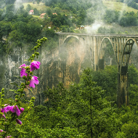 A walk with the clouds by Nenana :) - Landscapes Mountains & Hills ( clouds, nature, green, canyon, pink, bridge, flowers )