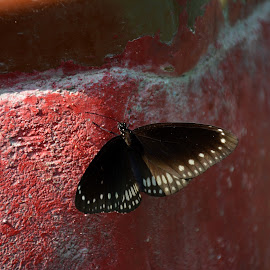 butterfly on the rocks!!! by Dipan Hajrah - Novices Only Wildlife