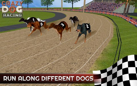 Crazy Dog Racing APK