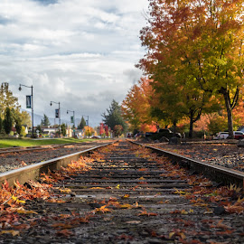Train tracks in the fall by Paul Hoy - Transportation Railway Tracks ( fall leaves, fall colors, fall, railroad tracks,  )