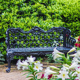 Benches and Flora by S Trevathan - City,  Street & Park  City Parks ( nature, park, bench, flora, outdoors, flowers, relax, tranquil, relaxing, tranquility )