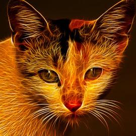 by Malay Maity - Digital Art Animals