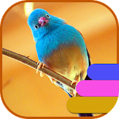 APK App Birds Theme and Launcher for BB, BlackBerry