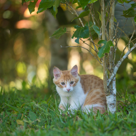 It is a great big world out there by Annette Flottwell - Animals - Cats Kittens ( gato, kitten, ginger, grass, rena, gatita, zacate, chat,  )