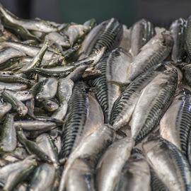 Fresh fish by Yordan Mihov - Food & Drink Ingredients ( venezia, fresh, fish, sony alpha, venice, sea, close up )