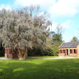 Historic Slave Quarters by Dale Moore - Buildings & Architecture Homes ( home, charleston, brick, plantation, historic, south carolina )