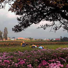 Flower gatherers by Cristobal Garciaferro Rubio - People Family ( flowers fiels, dlowers collector, trees, branches )