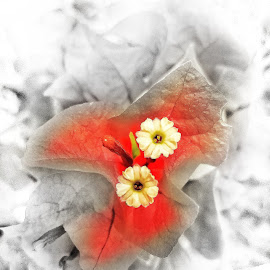 Inner by Erl de Jose - Digital Art Abstract ( nature, red flower, digital art, artistic, flowers, digital photography,  )