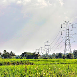 Lush Green by Nelson Moses - Landscapes Travel ( sky, urban landscapes, greenery, electricity, landscape )