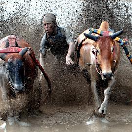 by Zairi Waldani - Sports & Fitness Rodeo/Bull Riding