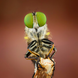 Alone by Tan Tc - Animals Insects & Spiders ( nature, fly, macro photography, insects, close up )
