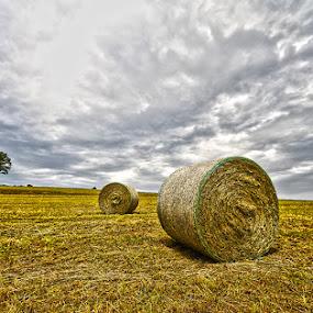 by Lovro Konjedic - Landscapes Prairies, Meadows & Fields ( fields )