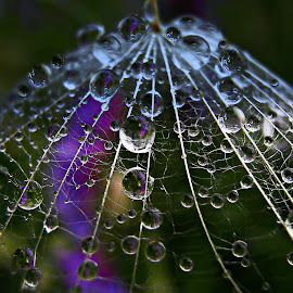 Lovely Bell  by Marija Jilek - Nature Up Close Natural Waterdrops