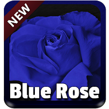 Blue Rose Keyboard