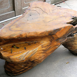 Natural Wood Bench by Dennis  Ng - Artistic Objects Furniture (  )