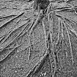 by Kevin Callahan - Nature Up Close Trees & Bushes