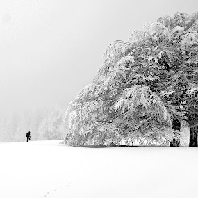 Into my arms by Tamas Valentin - Landscapes Mountains & Hills ( winter, tree, nature, black and white, landscape )