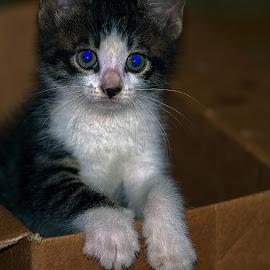by Kishu Sing - Animals - Cats Portraits