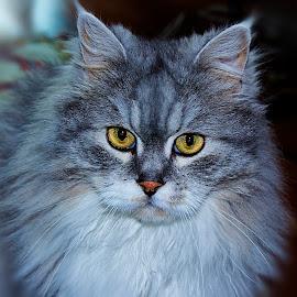 DOMBILI by Nihan Bayındır - Animals - Cats Portraits ( love, cat, nature, passion, portrait, photography, animal )