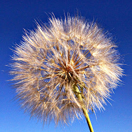 Seeds ready  by Gaylord Mink - Nature Up Close Other plants ( sky, seeds, plant, flower )