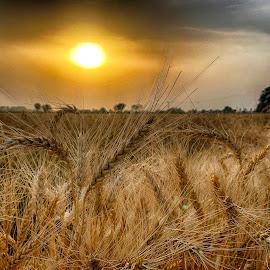 P4 by Abdul Rehman - Landscapes Sunsets & Sunrises (  )