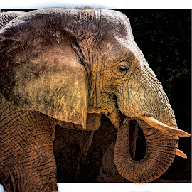 Everything was fine until this elephant walked into the picture... by Ron Meyers - Digital Art Animals