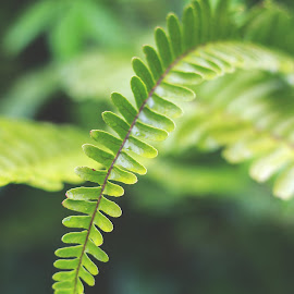 in our garden by Kimberley Leahy - Nature Up Close Leaves & Grasses ( nature, green, outdoors, leaves, garden, close up, canon eos )