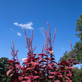 by Judy Florio - City,  Street & Park  City Parks ( potted plants, blue sky, plants, summer, gardens )