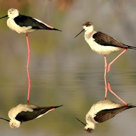 by Manoj Kulkarni - Digital Art Animals ( bird )