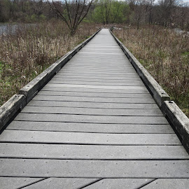 Path Through the Wetlands by Marcia Taylor - Novices Only Landscapes (  )