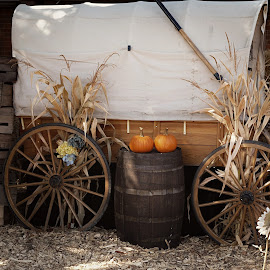 Covered Wagon by Millieanne T - Public Holidays Halloween