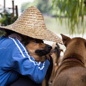 Love by Yi Xuan Lee - People Street & Candids ( love, dogs, hug, brown, straw hat )