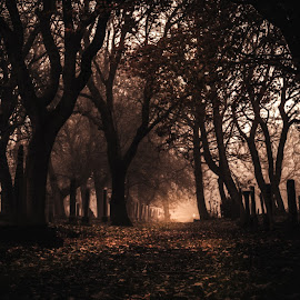 Gateshead East Cemetery by Adam Lang - City,  Street & Park  Cemeteries ( gateshead, tyneside, graves, cemetery, trees )