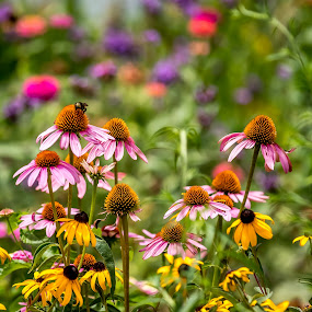 Garden of color by Ed Stines - Flowers Flower Gardens ( bugs, colorful, daisies, leaves, insects, flowers, garden, flower,  )