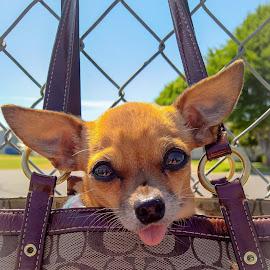 Coachbella by Jennifer Vermeulen - Animals - Dogs Puppies