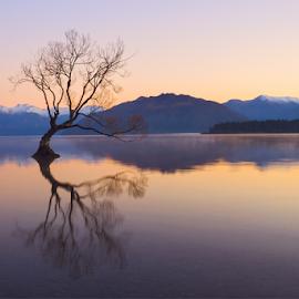 Wanaka Tree at Dawn ... by Anupam Hatui - Landscapes Waterscapes ( wanaka, dawn, tree, south island, waterscape, sunrise, lake wanaka, landscape, new zealand, canonnz, lonely tree )