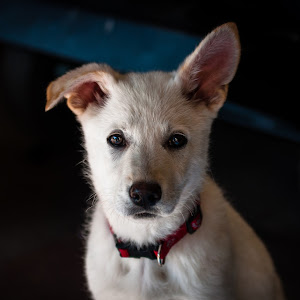 Puppy 1 no water-0205.jpg