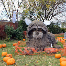 Racoon by Lenora Popa - Public Holidays Halloween ( tombstone, pumpkins, holidays, hay sculpture, halloween )