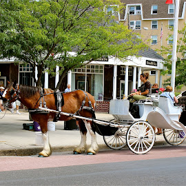 The carriage stop. by Peter DiMarco - City,  Street & Park  Street Scenes ( transport, carriage, horse and carriage, horse, transportation )