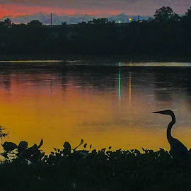 Heron Sunset 2 by Rick King - Instagram & Mobile iPhone ( water, bird, reflection, waterscape, sunset, lake, pond, heron )