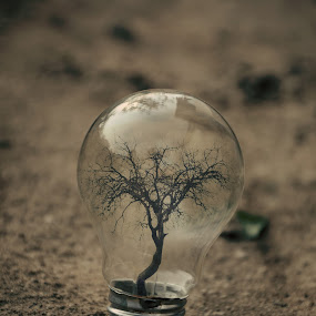 new bulb has flourished by Adrian  Limani - Digital Art Things ( flourished, tree, bulb, lamp, earth )