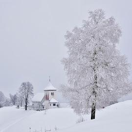 Pravljica v belem by Bojan Kolman - Landscapes Travel