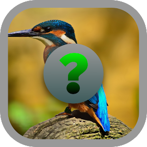 Birds Quiz APK
