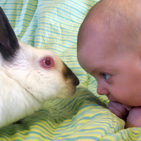 Face to Face by Kaylana Fief - Babies & Children Babies ( love, bunny, face to face, baby, kisses )